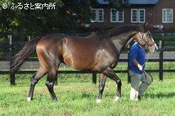 早くも日本競馬への適性を披露した好馬体