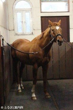 種牡馬引退が決まったアグネスデジタル