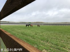 屋内周回コースの中では、管理馬の放牧も行われている