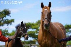 ラッキードリームの母サクラスリールと今年生まれた当歳馬