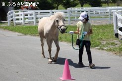 ひとりで馬をリードした