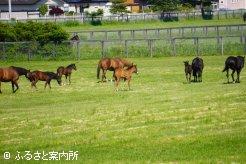 谷岡牧場の放牧地