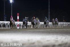 逃げるクインズプルートを追い詰める後続馬たち