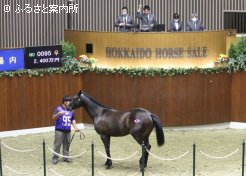 牝馬の最高価格となったルドラ2020