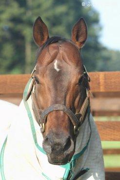 早くもJRA重賞勝ち馬を送り出したドレフォン