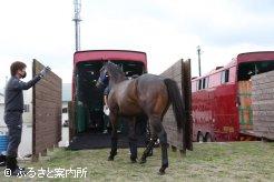 順番に宮崎行きの馬運車に乗り込んだ