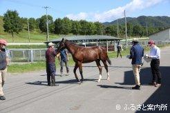 JRA日高育成牧場での馬体検査