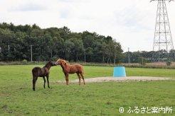 コミュニケーションを取り合う当歳馬たち