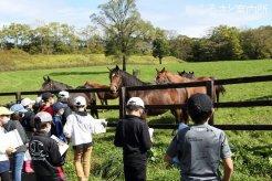 放牧中の繁殖牝馬と対面