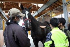 馬を触って人との体温の差に驚いた